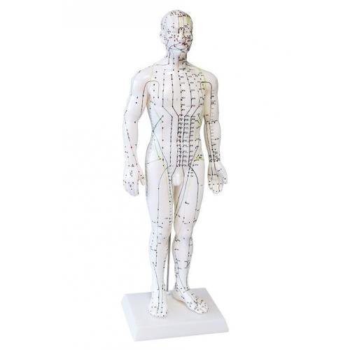 Ganzkörper Akupunkturmodell Mann